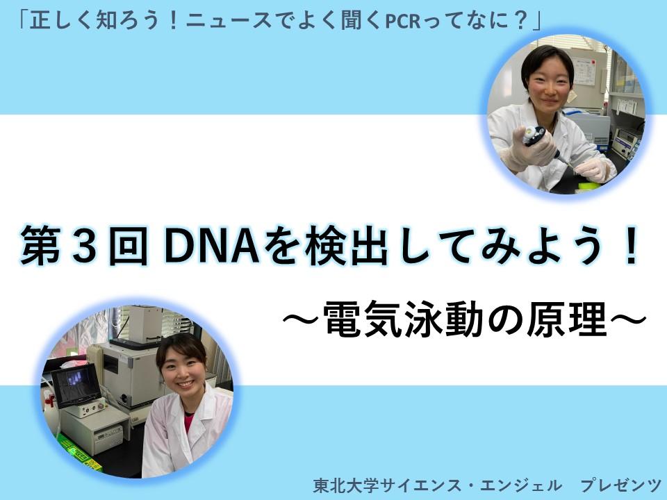 「正しく知ろう!ニュースでよく聞くPCRってなに?」第3回 DNAを検出してみよう! 〜電気泳動の原理〜